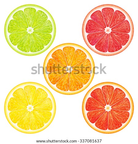 Collection citrus: grapefruit, orange, tangerine, lemon, lime on white background. Vector illustration for decorative poster, packaging design of cosmetics and food. - stock vector