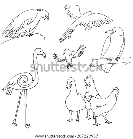 Collection of birds: Chicken, duck, rooster, flamingo, parrot, eagle.. - stock vector