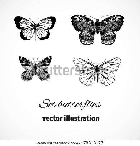 Collection of butterflies isolated on white background. Set design elements with butterflies. Vector illustration/ EPS 10 - stock vector