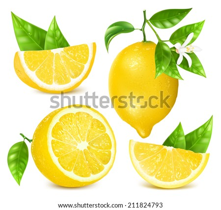 Collection of different vector illustration of fresh lemons with leaves and blossom. Vector illustration contains gradient mesh. - stock vector