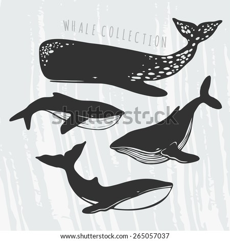 collection of different whales, black and white drawings of oceanic mammals  - stock vector