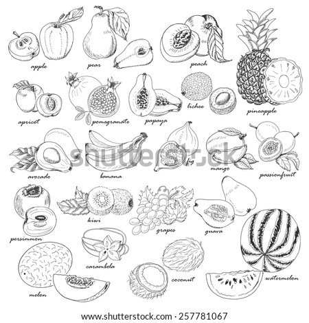 Collection of fruit in sketch style. Vector illustration for your design - stock vector