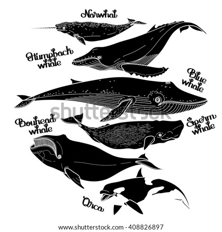 Collection of graphic whales isolated on white background. Vector giant sea and ocean creatures in black and white colors - stock vector