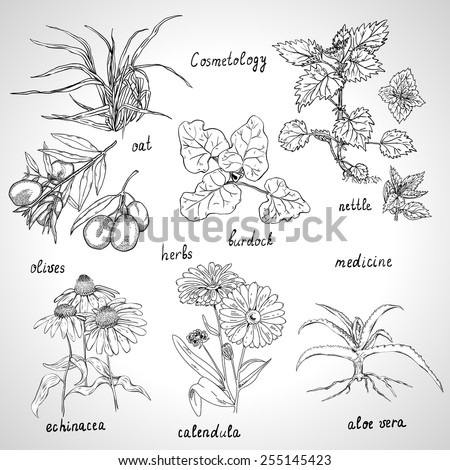 Collection of hand-drawn herbs are also used in cosmetics. - stock vector