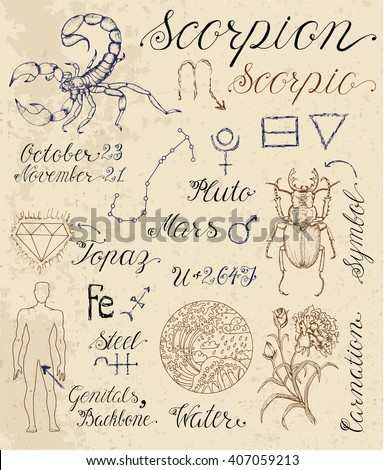 Collection of hand drawn symbols for astrological zodiac sign Scorpion or Scorpio. Line art vector illustration of engraved horoscope set. Doodle drawing and sketch with calligraphic lettering - stock vector