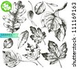 Collection of highly detailed hand drawn leaves isolated on white background - stock vector