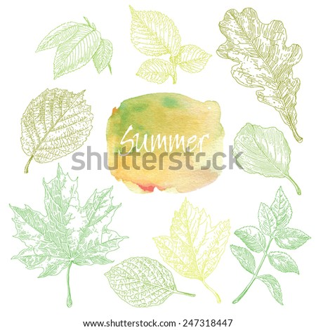 Collection of highly detailed hand drawn leaves isolated on white background. Watercolor blot. Summer background. - stock vector