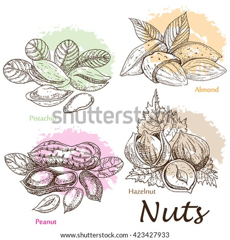 Collection of nuts. - stock vector