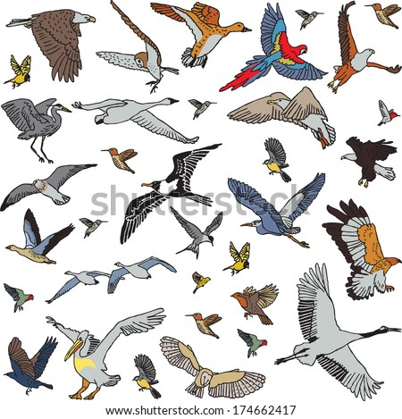 Color birds set seamless pattern The big set of different wild birds. Every objects is separated. Can be used like seamless pattern. Isolated on white background.  Color vector illustration. - stock vector