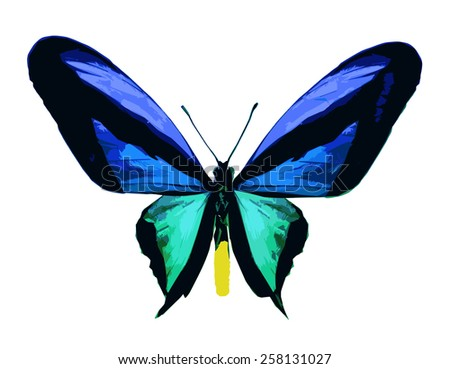 Color butterfly, isolated on white - stock vector