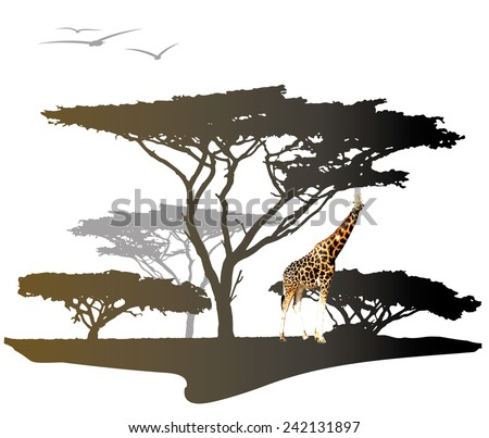 Color giraffe on savannah with silhouette of africa trees, illustration isolated on white - stock vector