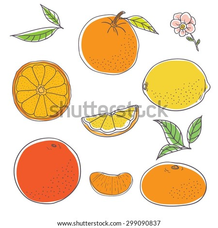 Color illustration of citrus fruits. Linear hand-drawing. Vector illustration. - stock vector