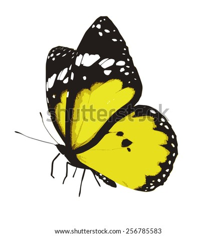 Color tropical butterfly , isolated on white - stock vector