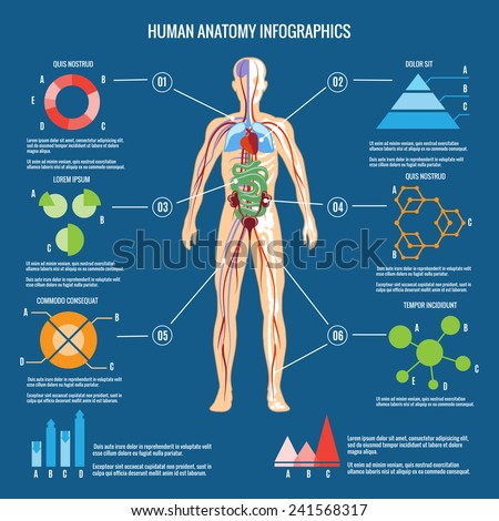Colored Human Body Anatomy Infographic Design on Blue Green Background. - stock vector