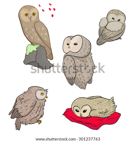 colored set of owls - stock vector