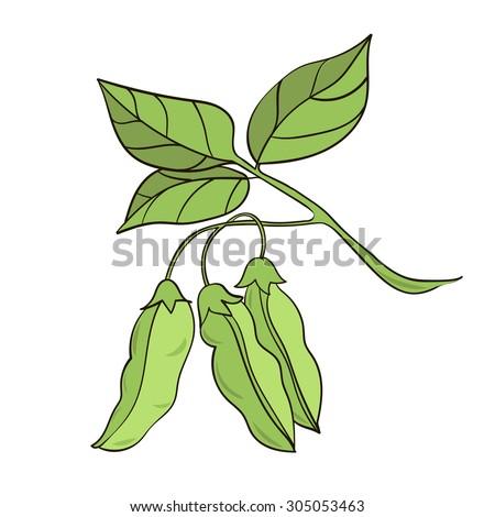 Soybean Plant Stock Vectors & Vector Clip Art | Shutterstock