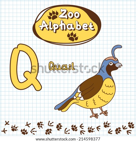 animal with letter q pictures of animals with q pictures of nnature 4782