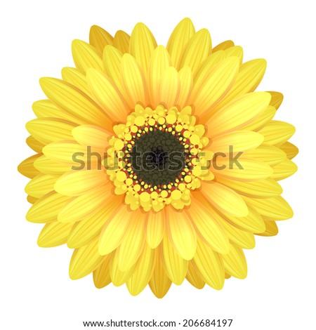 Colorful gerbera flower head - yellow and black colors. - stock vector