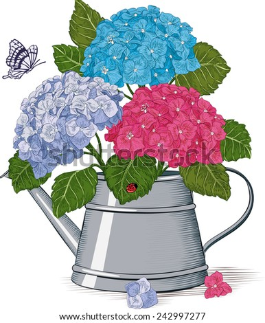 Colorful hydrangea in a watering can isolated on a white background - stock vector