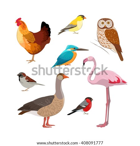 Colorful realistic bird collection: Owl, Flamingo, Kingfisher, Goose, Chicken, Bullfinch, Sparrow. - stock vector