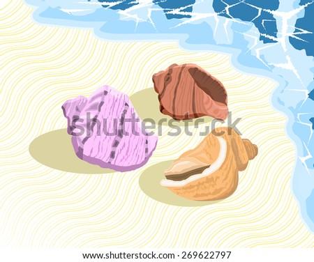 Colorful seashells on the seashore. - stock vector