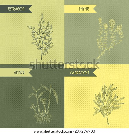 Cooking herbs and spices. Thyme, estragon, ginger, cardamom. Retro hand drawn vector illustration - stock vector