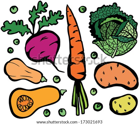 Cool Healthy Vegetable Set: Butternut Squash, Carrot, Savoy Cabbage, Potato, Sweet Potato, Green Peas and Beetroot - stock vector