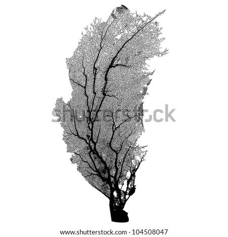 Coral Sea Fan silhouette vector - stock vector