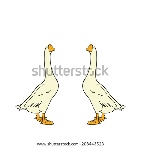 Couple of Goose : isolated vector - stock vector