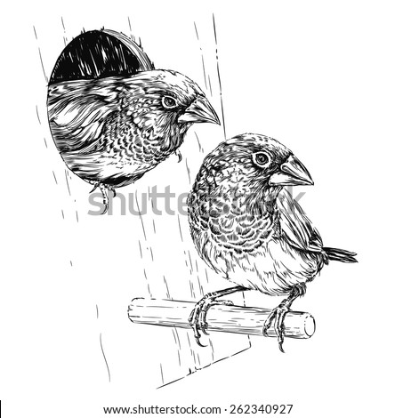 couple of Japanese finch sitting on the branch near nest - stock vector