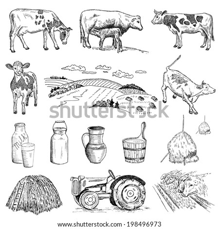 cow and milk. hand drawing set of vector sketches - stock vector
