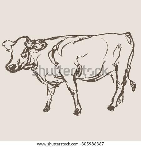 cow vector, hand draw sketch  - stock vector