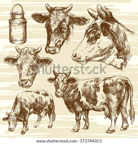 cows, farm animal - hand drawn collection - stock vector