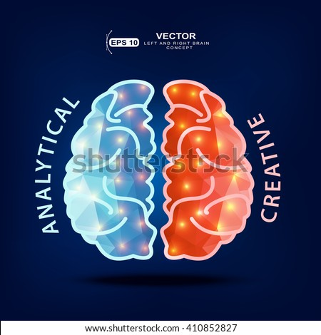 Creative brain Idea.Left and right hemisphere of human brain - stock vector