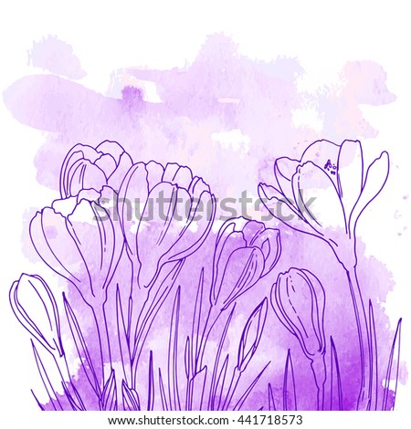Crocuses. Flowers line drawn on a watercolor background. Spring flowers. Crocus leaves. Coloring. Abstract background of paint splashes and streaks - stock vector