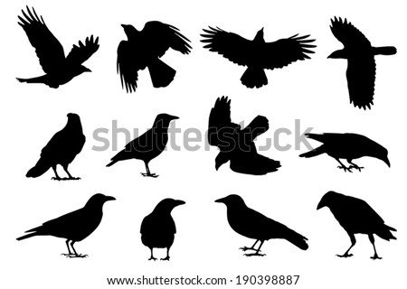 crow silhouettes on the white background - stock vector