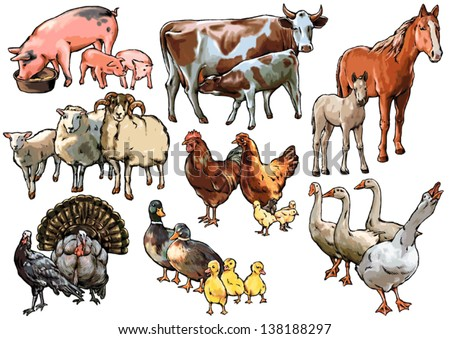 Culture pets and animals living on the farm and raised by humans, birds, farm, chicken, cow, pig, horse, sheep, turkey, goose, duck, foal, calf, lamb, piglet - stock vector