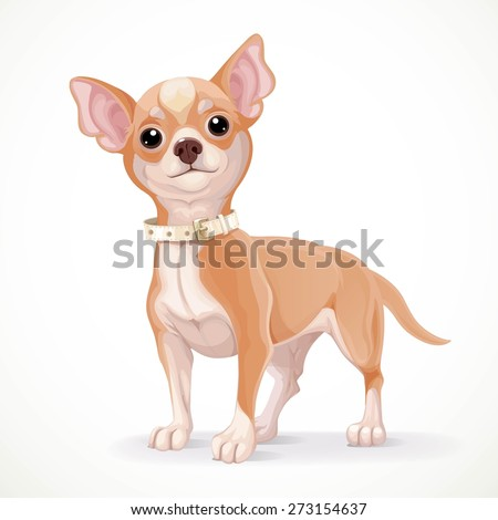 Cute little chihuahua dog vector illustration isolated on white background - stock vector