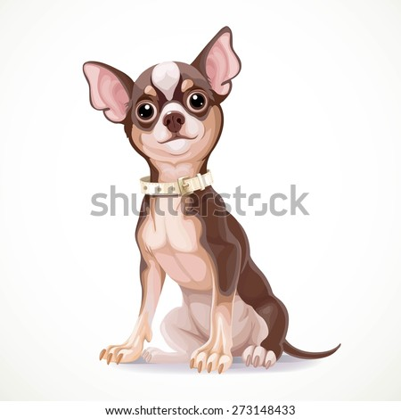 Cute little chihuahua dog wearing a collar vector illustration isolated on white background - stock vector