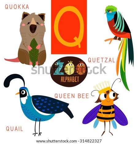 Cute zoo alphabet in vector.Q letter. Funny cartoon animals:Quokka,quetzal,quail,queen bee. Alphabet design in a colorful style. - stock vector