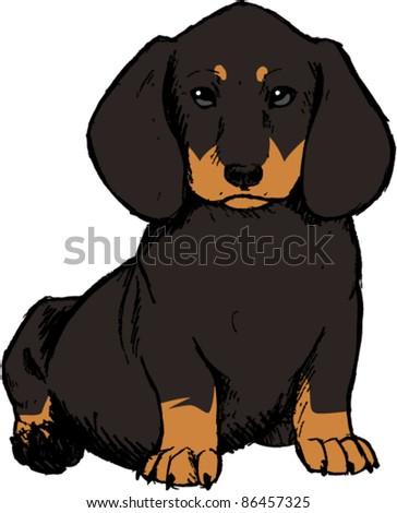 Dachshund Puppy - stock vector