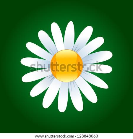 Daisy flower on a dark green background. Vector illustration - stock vector