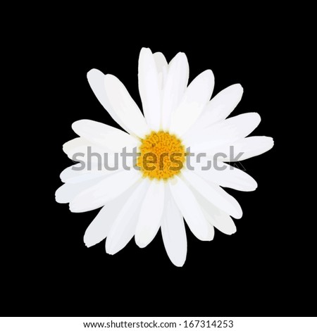 daisy isolated. Vector - stock vector