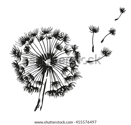 Dandelion blowing hand drawn vector illustration, isolated on white background - stock vector