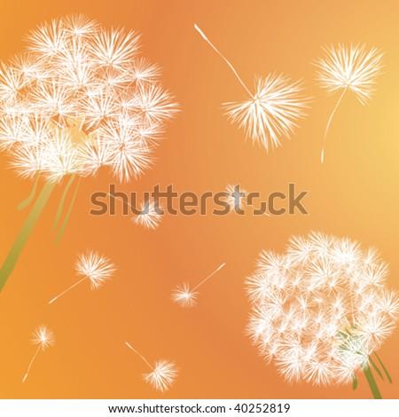 Dandelion illustration - stock vector