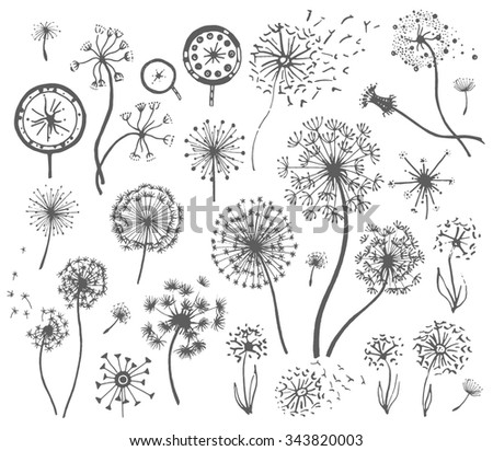Dandelion illustration set - stock vector
