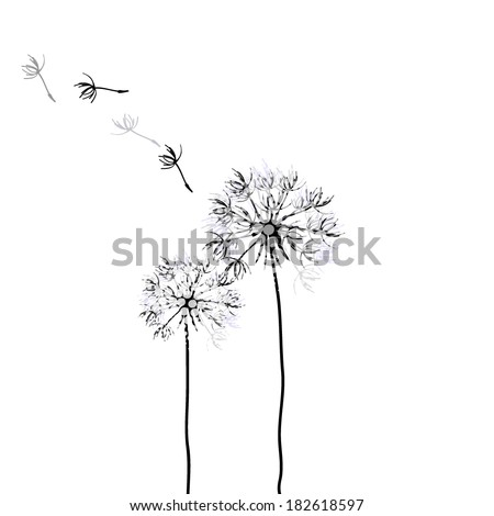 dandelion on a white background. Vector - stock vector