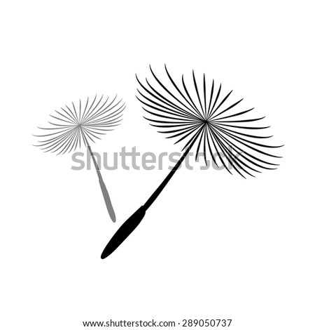 Dandelion Silhouette on White Background - stock vector