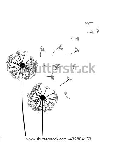 Dandelion vector  - stock vector