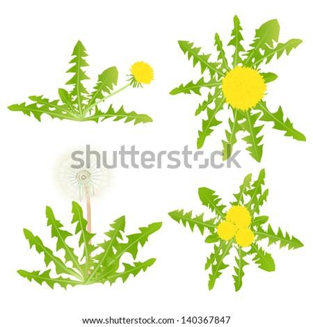 Dandelion vector background set - stock vector